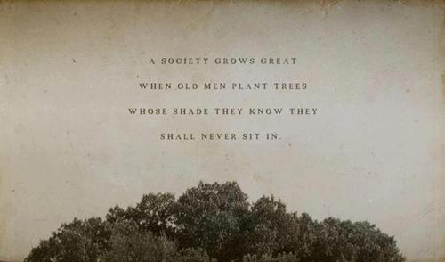 A Society Grows great when old men plant trees whose Shade they know they shall never sit in. Photo with a Tree canopy in the Background